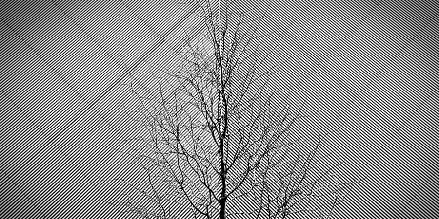 lines in four directions